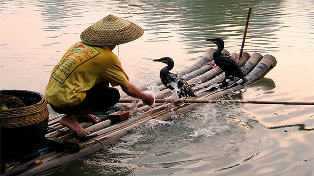 Cormorant fisherman near Yangshuo washes off his bamboo raft after a fishing trip.(photo credit:  © Phil Chapman 2007)